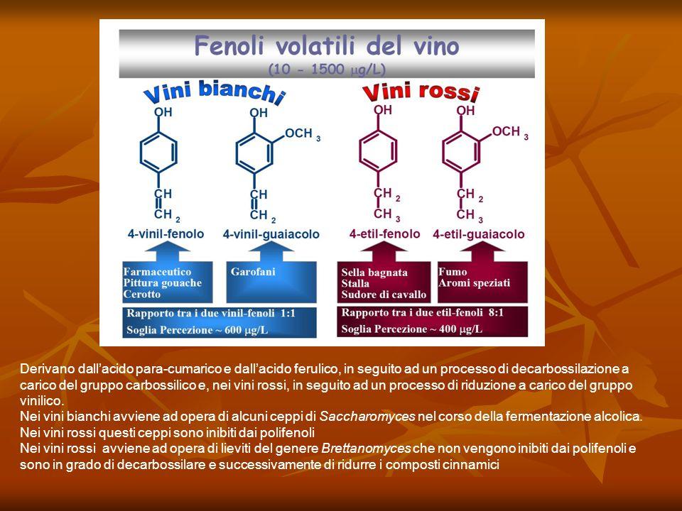 Derivano dallacido para-cumarico e dallacido ferulico, in seguito ad un processo di decarbossilazione a carico del gruppo carbossilico e, nei vini ros