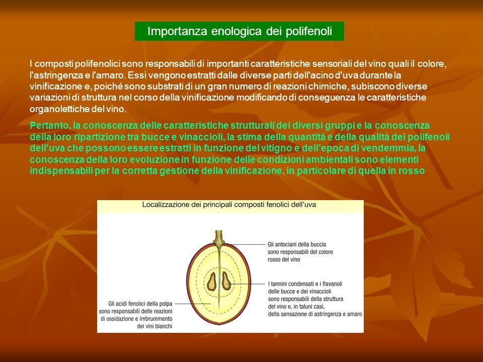 Importanza enologica dei polifenoli I composti polifenolici sono responsabili di importanti caratteristiche sensoriali del vino quali il colore, l'ast