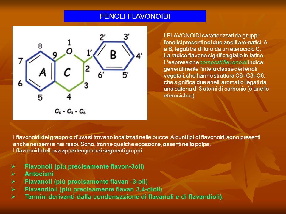 FENOLI FLAVONOIDI Flavonoli (più precisamente flavon-3oli) Antociani Flavanoli (più precisamente flavan -3-oli) Flavandioli (più precisamente flavan 3