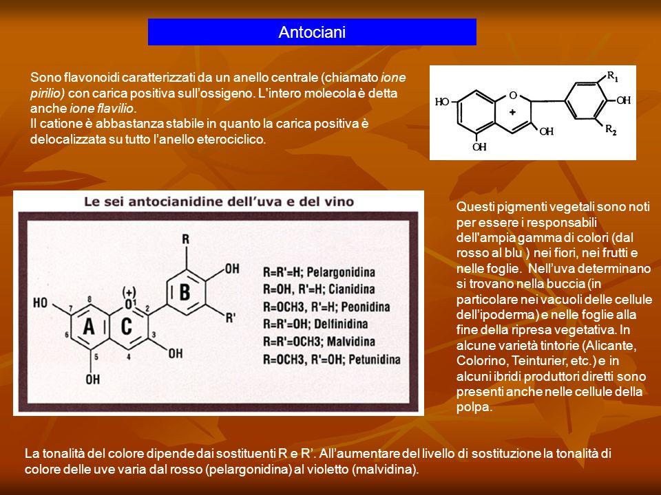 Antociani Sono flavonoidi caratterizzati da un anello centrale (chiamato ione pirilio) con carica positiva sullossigeno. L'intero molecola è detta anc