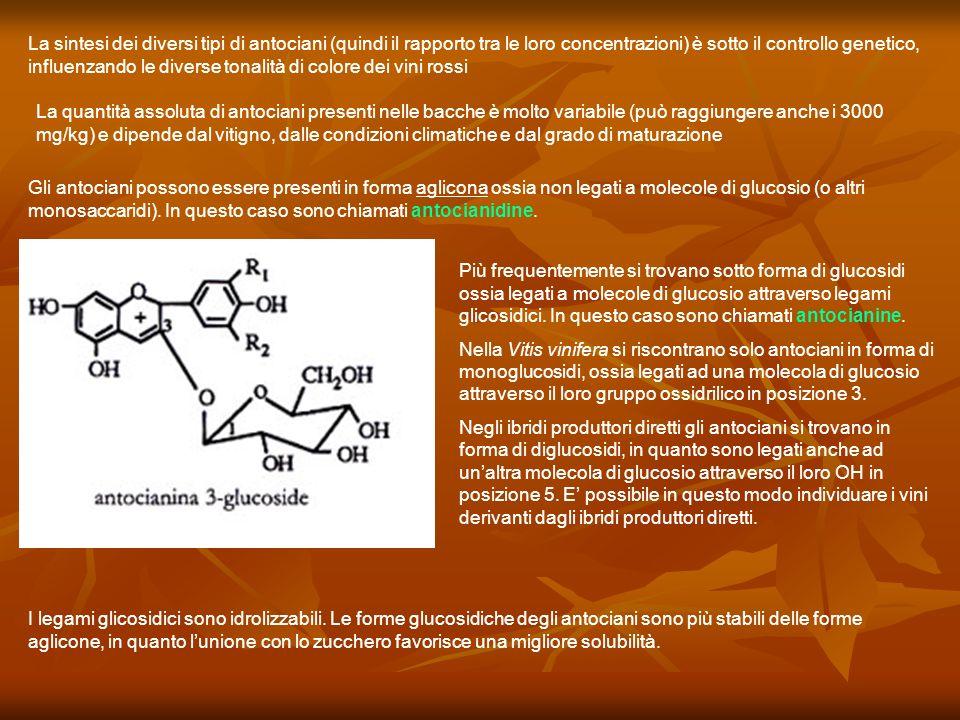 La sintesi dei diversi tipi di antociani (quindi il rapporto tra le loro concentrazioni) è sotto il controllo genetico, influenzando le diverse tonali