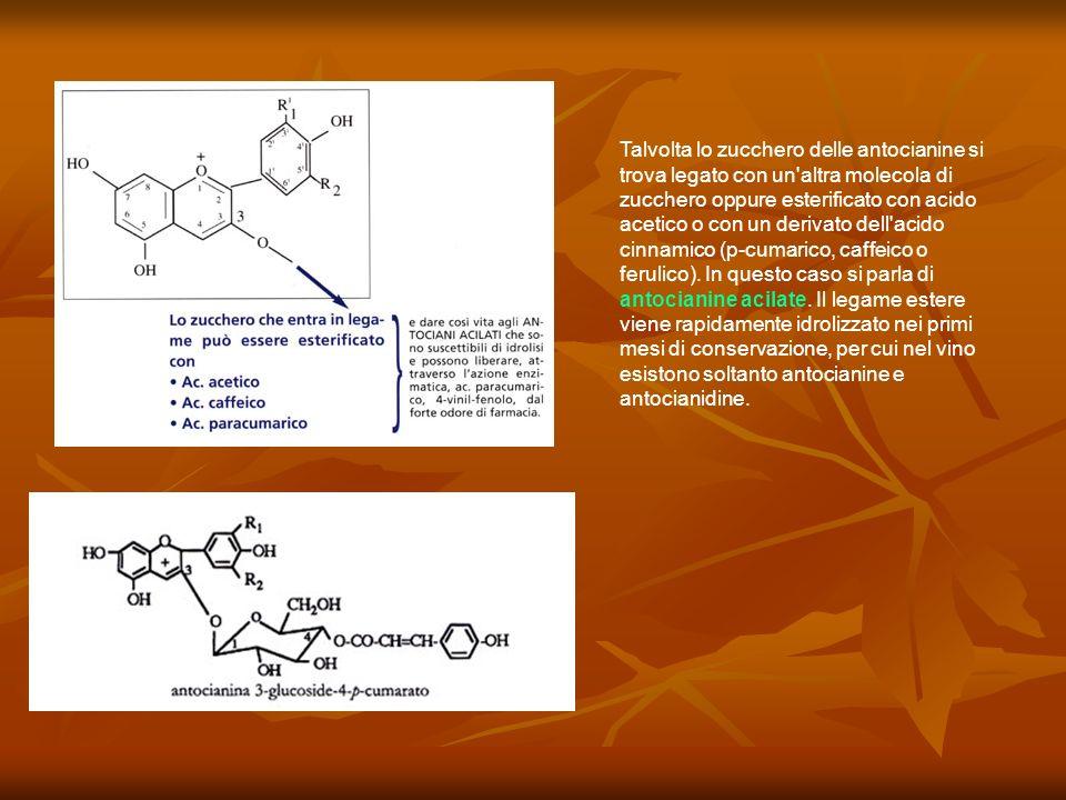 Talvolta lo zucchero delle antocianine si trova legato con un'altra molecola di zucchero oppure esterificato con acido acetico o con un derivato dell'