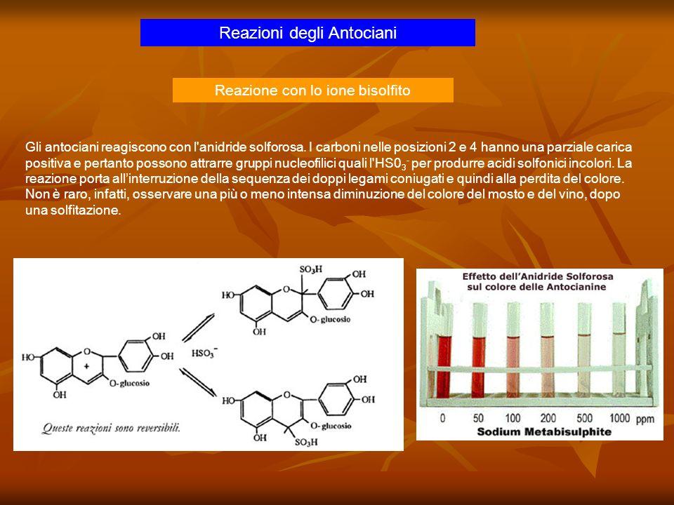 Reazioni degli Antociani Gli antociani reagiscono con l'anidride solforosa. I carboni nelle posizioni 2 e 4 hanno una parziale carica positiva e perta