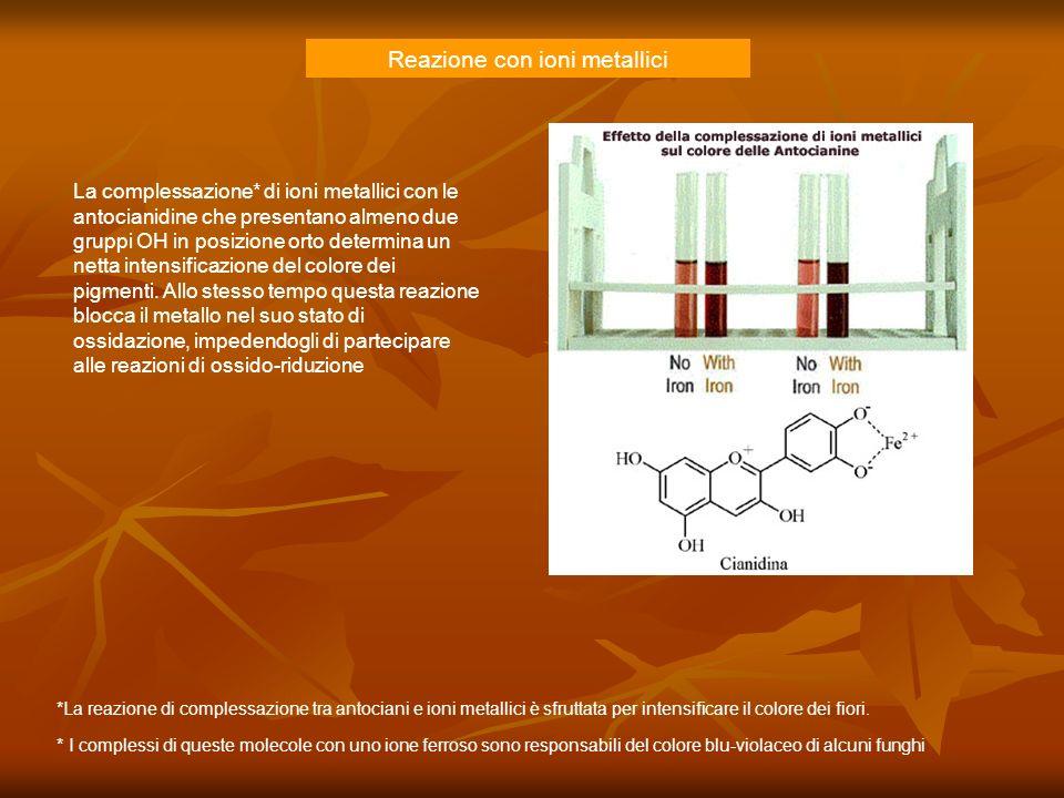 Reazione con ioni metallici La complessazione* di ioni metallici con le antocianidine che presentano almeno due gruppi OH in posizione orto determina