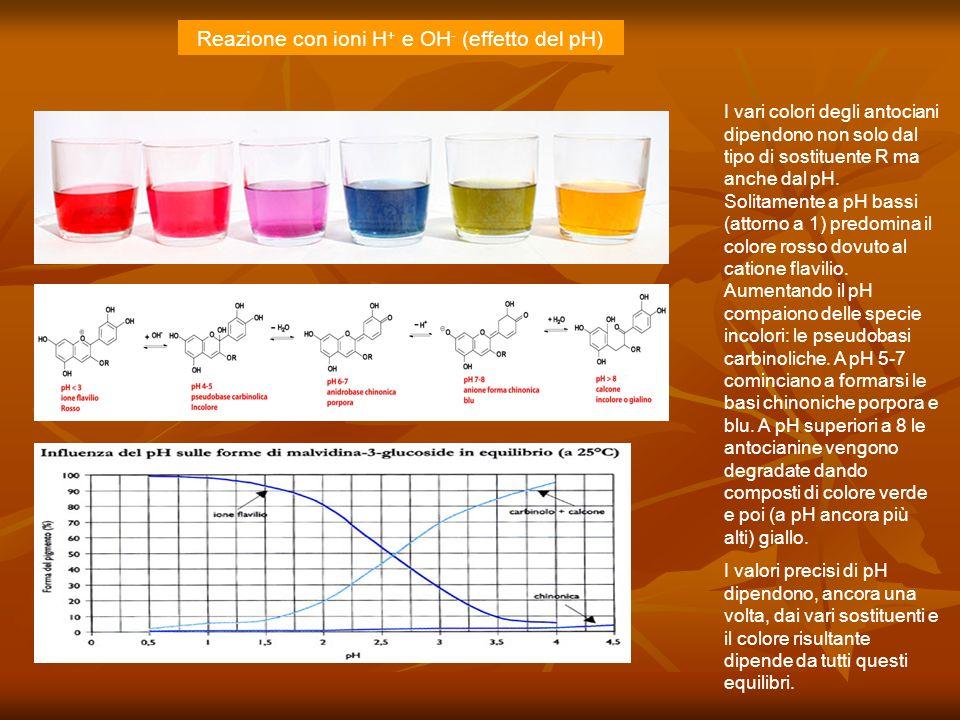 I vari colori degli antociani dipendono non solo dal tipo di sostituente R ma anche dal pH. Solitamente a pH bassi (attorno a 1) predomina il colore r