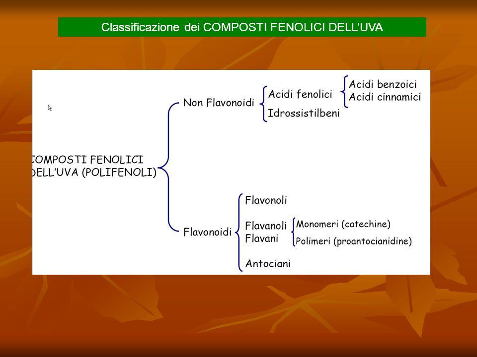 Classificazione dei COMPOSTI FENOLICI DELLUVA