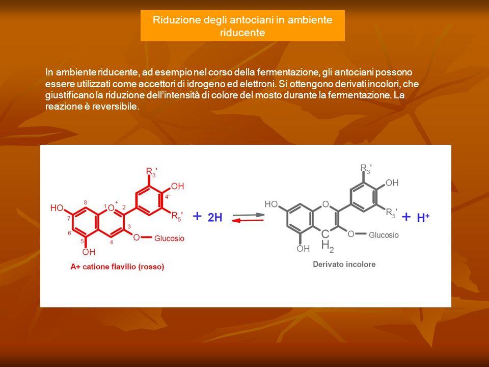 Riduzione degli antociani in ambiente riducente In ambiente riducente, ad esempio nel corso della fermentazione, gli antociani possono essere utilizza
