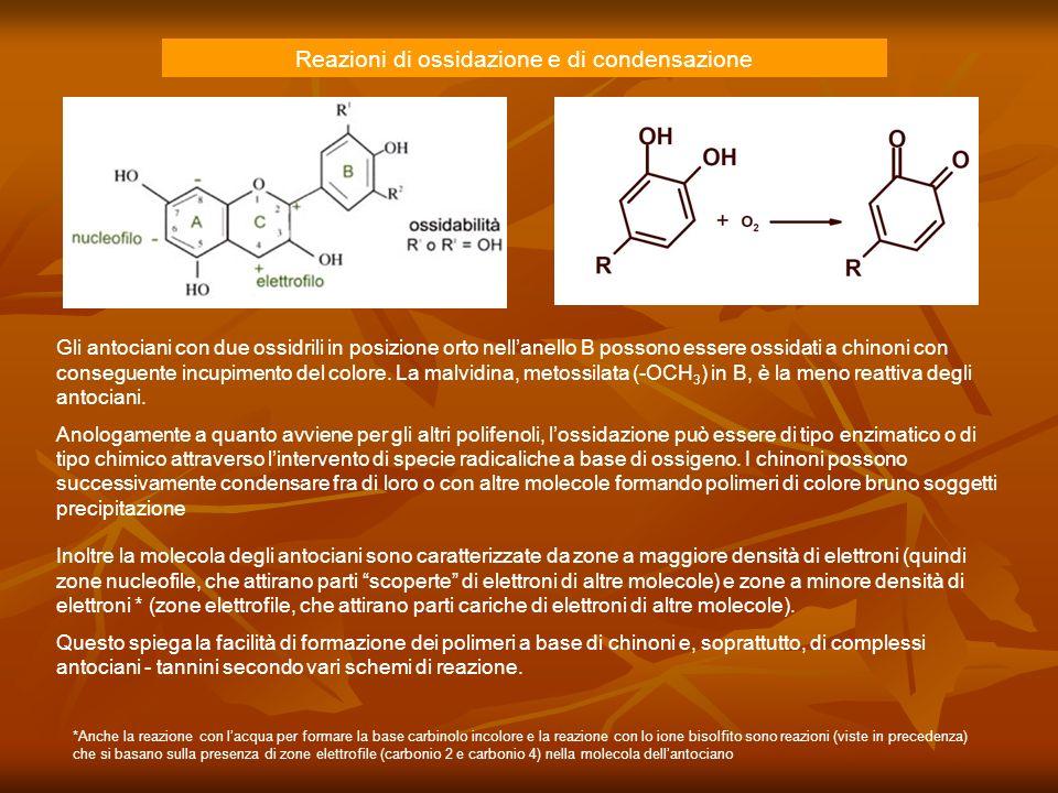 Reazioni di ossidazione e di condensazione Inoltre la molecola degli antociani sono caratterizzate da zone a maggiore densità di elettroni (quindi zon