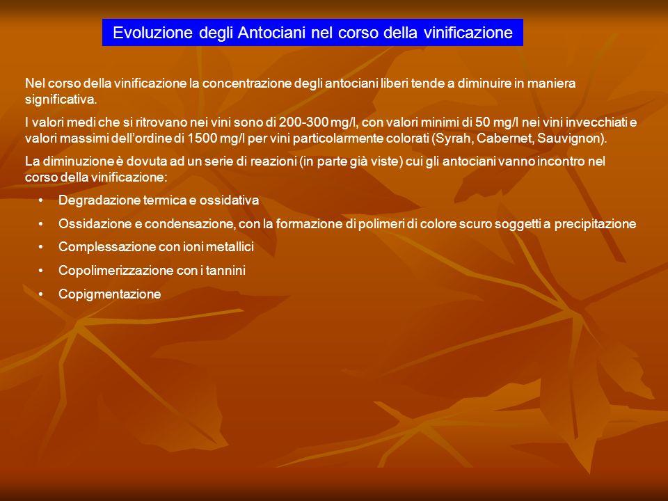 Evoluzione degli Antociani nel corso della vinificazione Nel corso della vinificazione la concentrazione degli antociani liberi tende a diminuire in m