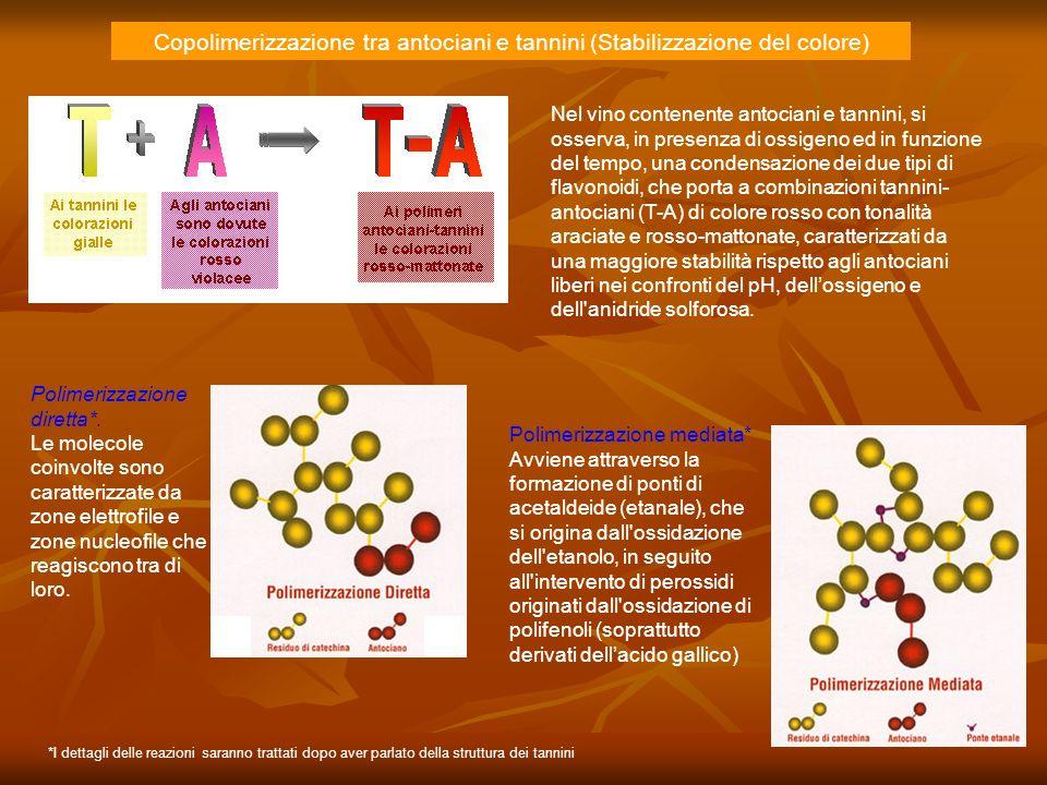 Copolimerizzazione tra antociani e tannini (Stabilizzazione del colore) Nel vino contenente antociani e tannini, si osserva, in presenza di ossigeno e
