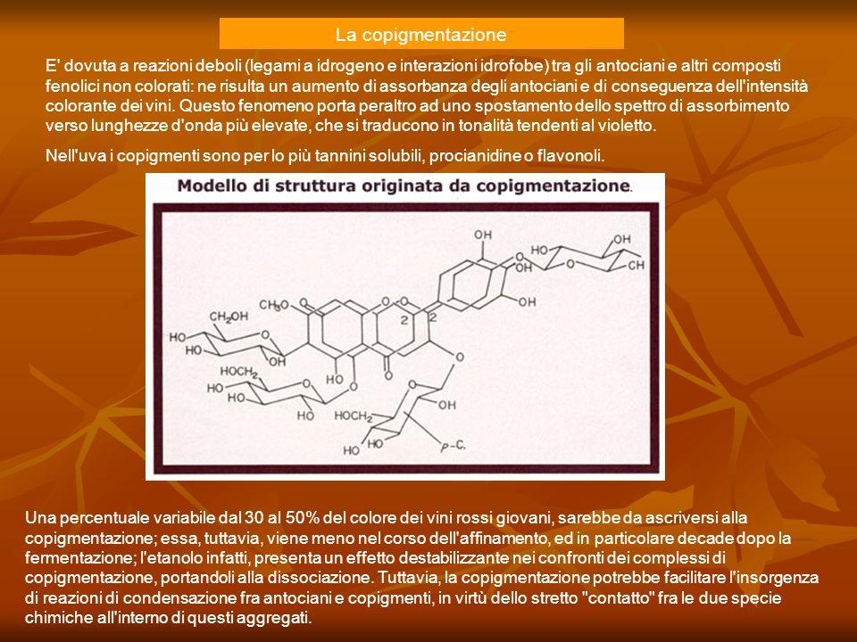 E' dovuta a reazioni deboli (legami a idrogeno e interazioni idrofobe) tra gli antociani e altri composti fenolici non colorati: ne risulta un aumento