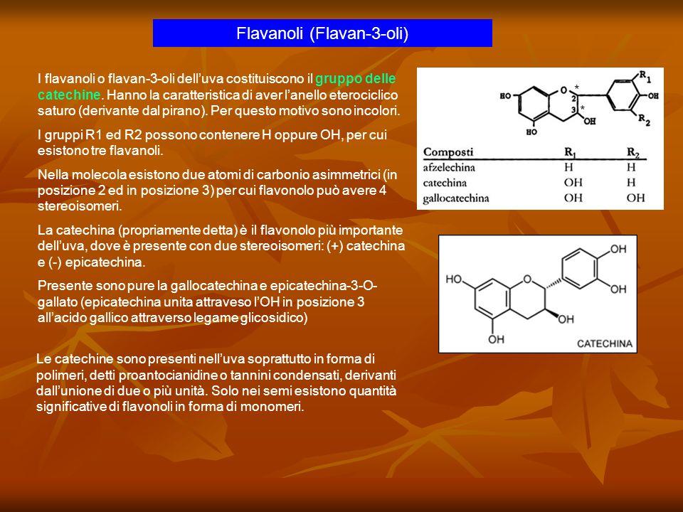 Flavanoli (Flavan-3-oli) I flavanoli o flavan-3-oli delluva costituiscono il gruppo delle catechine. Hanno la caratteristica di aver lanello eterocicl