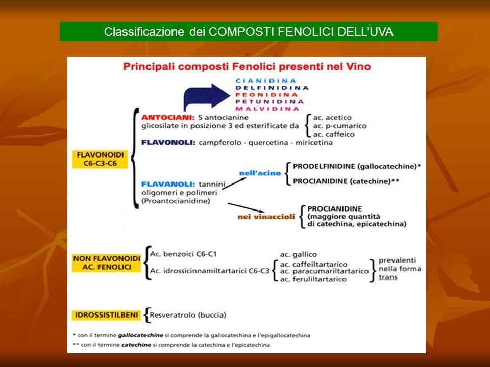 Origine dei COMPOSTI FENOLICI