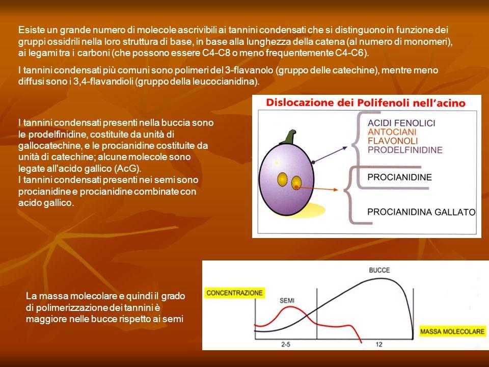 Esiste un grande numero di molecole ascrivibili ai tannini condensati che si distinguono in funzione dei gruppi ossidrili nella loro struttura di base