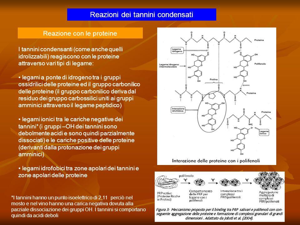 Reazioni dei tannini condensati Reazione con le proteine I tannini condensanti (come anche quelli idrolizzabili) reagiscono con le proteine attraverso
