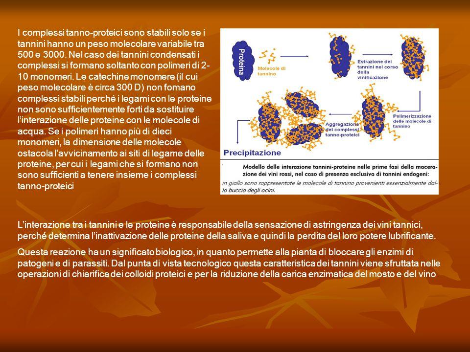 I complessi tanno-proteici sono stabili solo se i tannini hanno un peso molecolare variabile tra 500 e 3000. Nel caso dei tannini condensati i comples