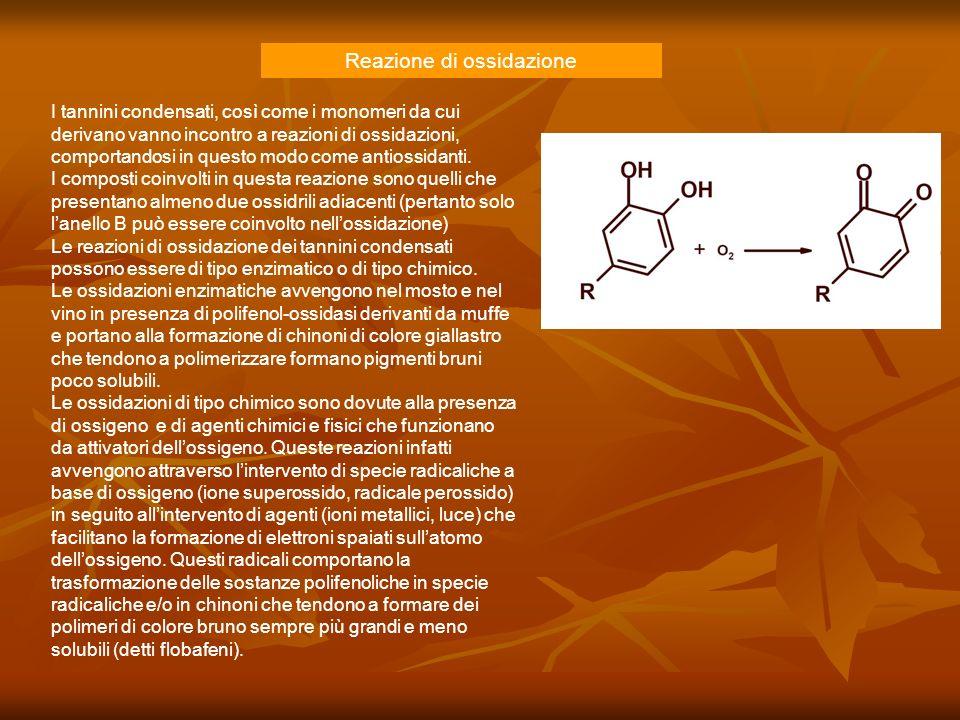 Reazione di ossidazione I tannini condensati, così come i monomeri da cui derivano vanno incontro a reazioni di ossidazioni, comportandosi in questo m