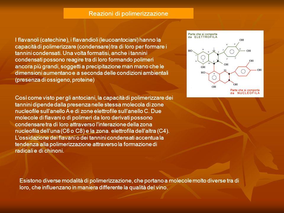 Reazioni di polimerizzazione I flavanoli (catechine), i flavandioli (leucoantociani) hanno la capacità di polimerizzare (condensare) tra di loro per f