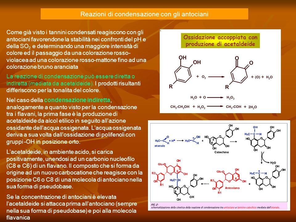 Reazioni di condensazione con gli antociani Come già visto i tannini condensati reagiscono con gli antociani favorendone la stabilità nei confronti de