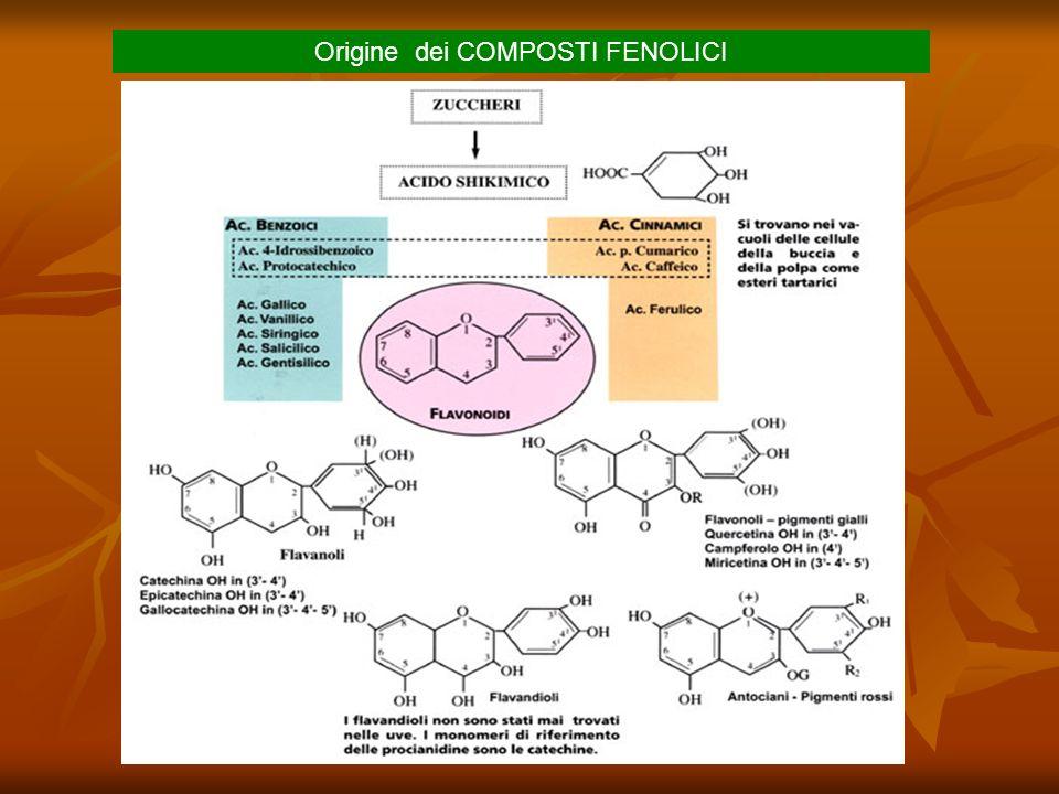 Reazioni di polimerizzazione I flavanoli (catechine), i flavandioli (leucoantociani) hanno la capacità di polimerizzare (condensare) tra di loro per formare i tannini condensati.