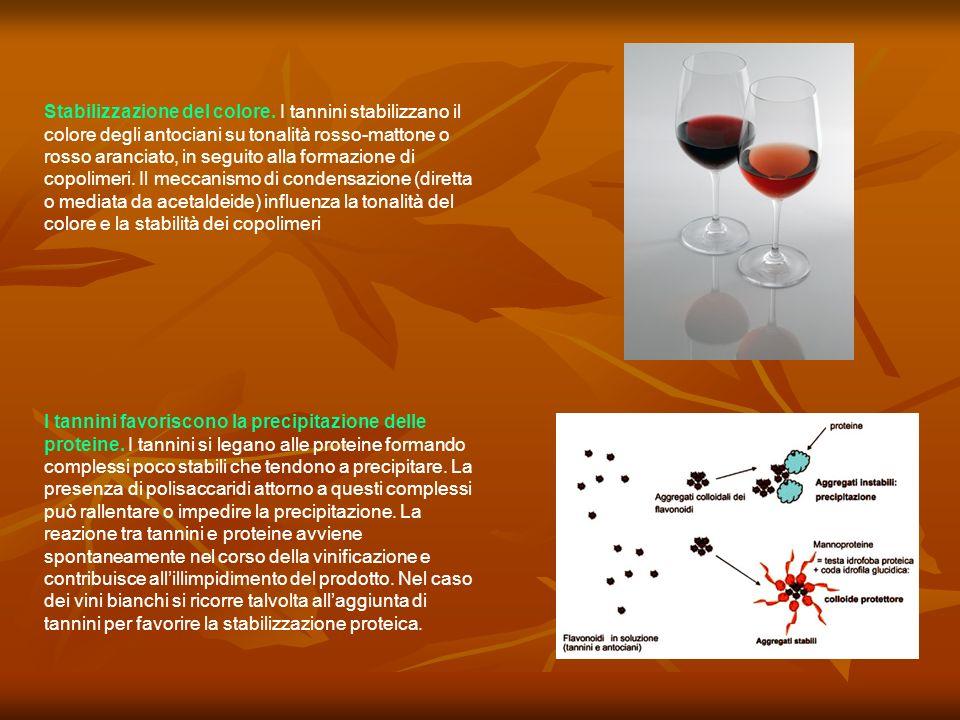 I tannini favoriscono la precipitazione delle proteine. I tannini si legano alle proteine formando complessi poco stabili che tendono a precipitare. L