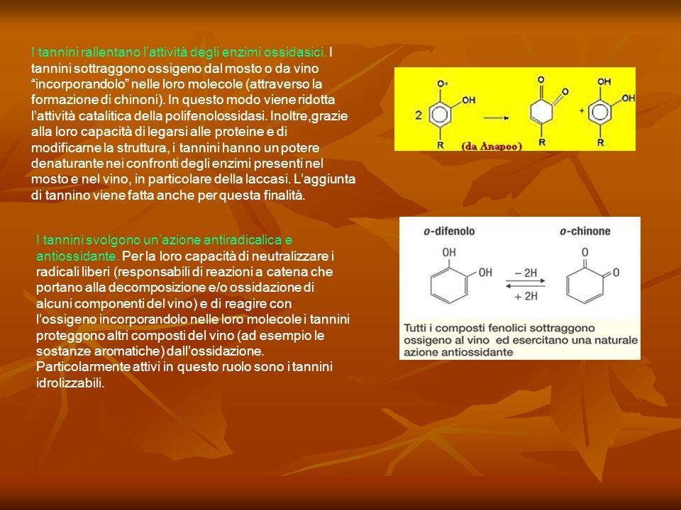 I tannini rallentano lattività degli enzimi ossidasici. I tannini sottraggono ossigeno dal mosto o da vino incorporandolo nelle loro molecole (attrave