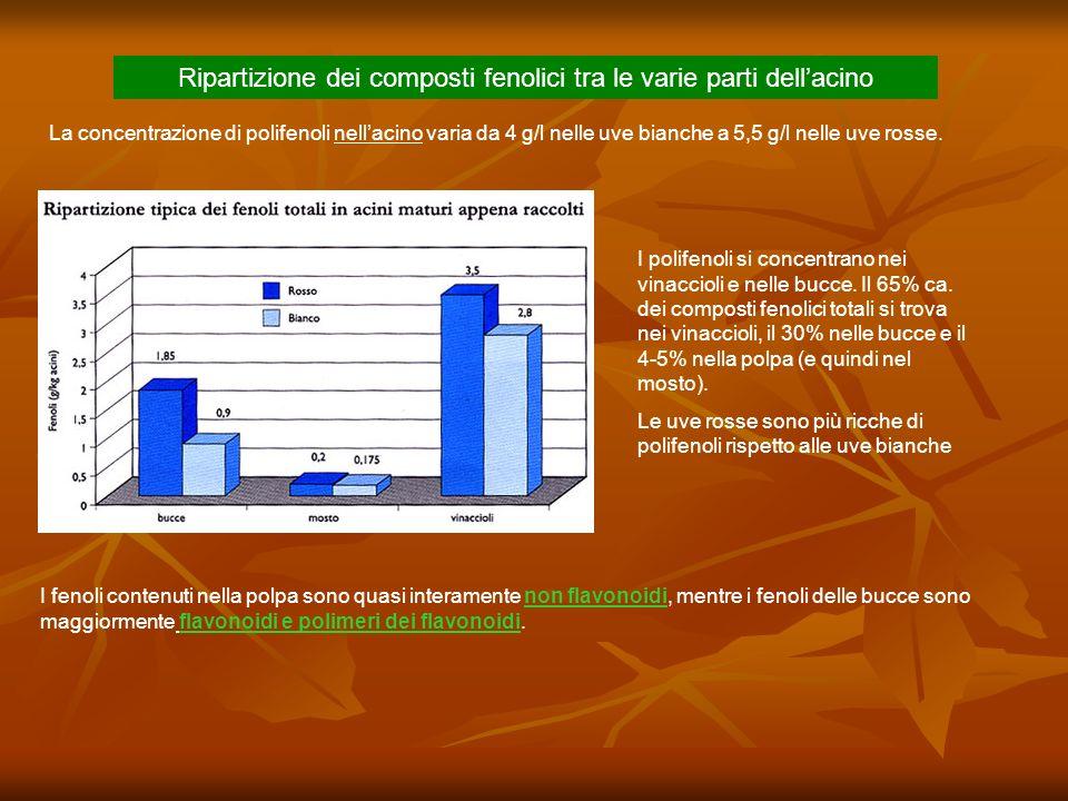 I polifenoli si concentrano nei vinaccioli e nelle bucce. Il 65% ca. dei composti fenolici totali si trova nei vinaccioli, il 30% nelle bucce e il 4-5