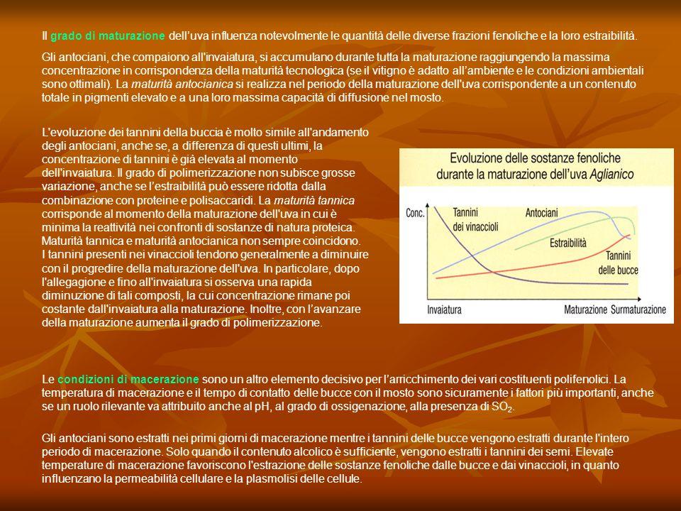 Reazioni di condensazione con gli antociani Come già visto i tannini condensati reagiscono con gli antociani favorendone la stabilità nei confronti del pH e della SO 2 e determinando una maggiore intensità di colore ed il passaggio da una colorazione rosso- violacea ad una colorazione rosso-mattone fino ad una colorazione bruno aranciata La reazione di condensazione può essere diretta o indiretta (mediata da acetaldeide).