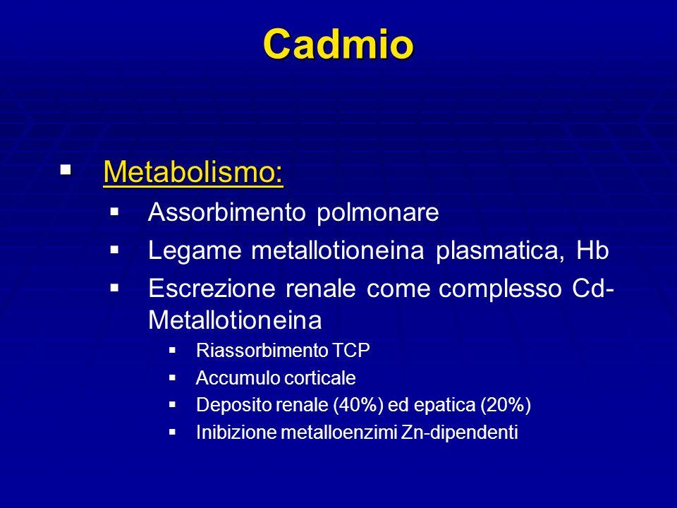 Cadmio Metabolismo: Metabolismo: Assorbimento polmonare Legame metallotioneina plasmatica, Hb Escrezione renale come complesso Cd- Metallotioneina Riassorbimento TCP Accumulo corticale Deposito renale (40%) ed epatica (20%) Inibizione metalloenzimi Zn-dipendenti