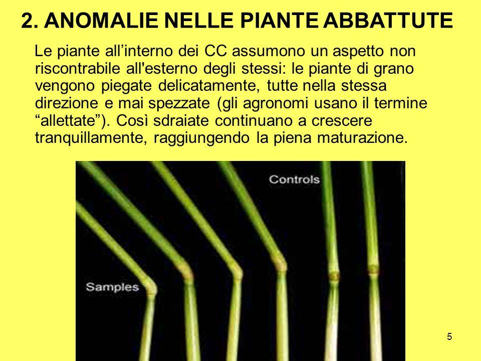 5 Le piante allinterno dei CC assumono un aspetto non riscontrabile all'esterno degli stessi: le piante di grano vengono piegate delicatamente, tutte