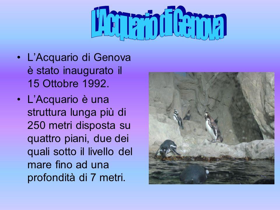 LAcquario di Genova è stato inaugurato il 15 Ottobre 1992. LAcquario è una struttura lunga più di 250 metri disposta su quattro piani, due dei quali s