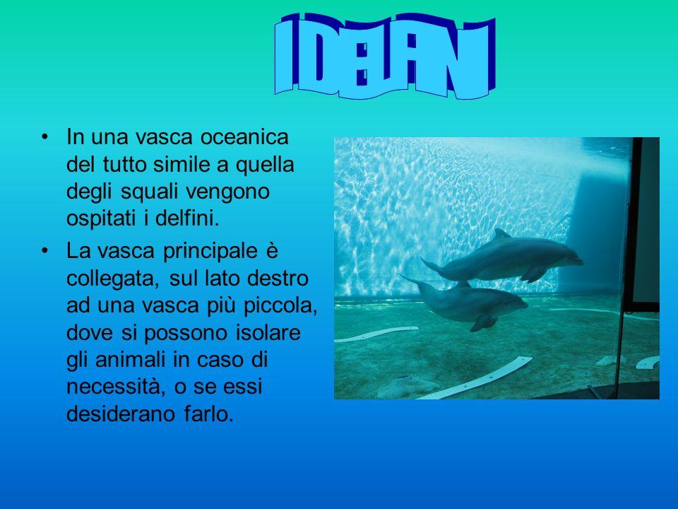 In una vasca oceanica del tutto simile a quella degli squali vengono ospitati i delfini.