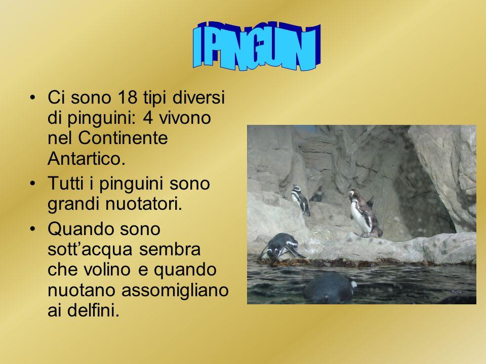 Ci sono 18 tipi diversi di pinguini: 4 vivono nel Continente Antartico. Tutti i pinguini sono grandi nuotatori. Quando sono sottacqua sembra che volin