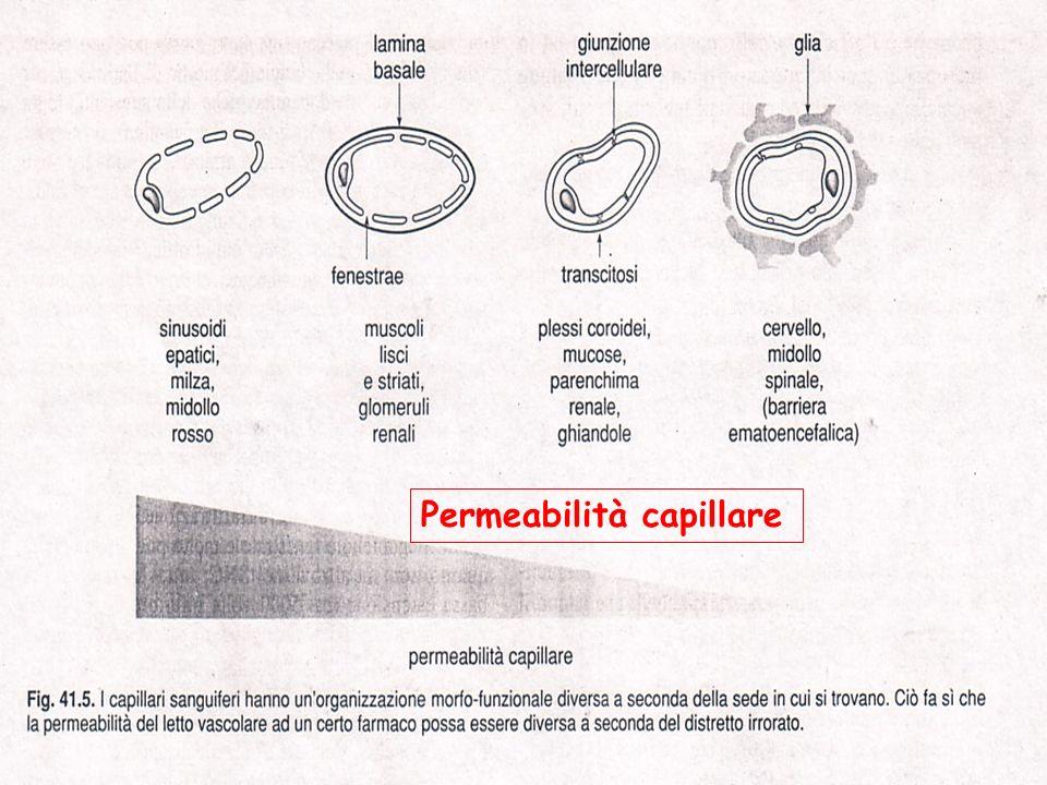 Caratteristiche della permeabilità capillare La permeabilità è diversa nei vari distretti capillari La velocità con cui il farmaco raggiunge gli spazi interstiziali di un determinato distretto tessutale è influenzata non solo da variazioni di permeabilità ma anche da variazioni della perfusione del letto capillare