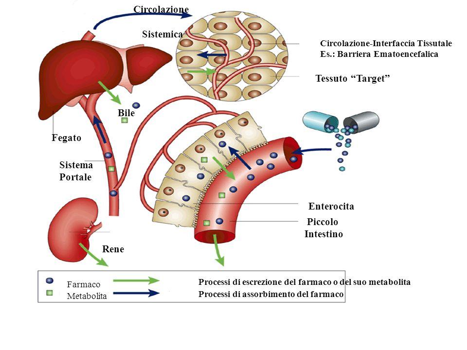 Il farmaco generico: Bioequivalenza Prof. Maria Del Zompo Disciplina: Farmacologia Clinica Dipartimento di Neuroscienze Università di Cagliari Corso d