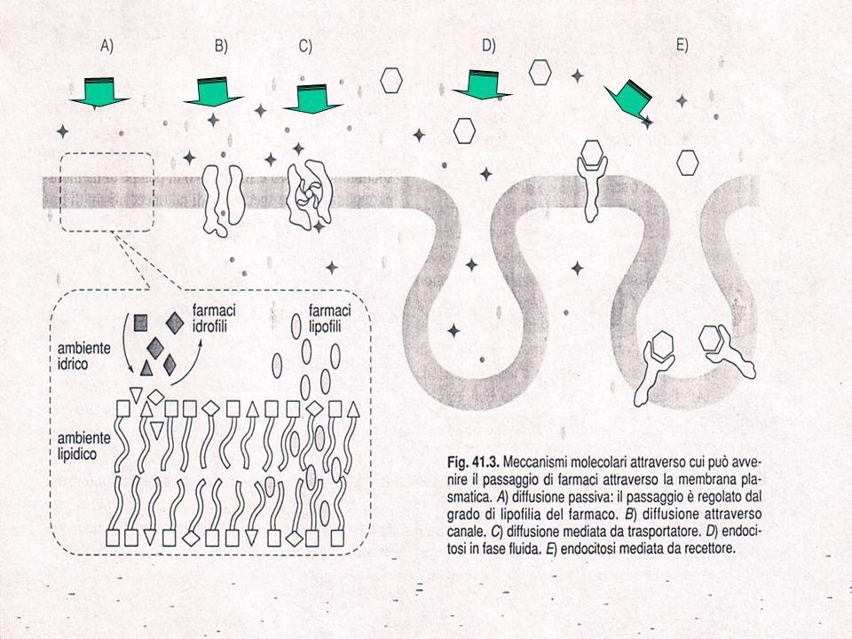 Trasporto di farmaci attraverso le membrane cellulari Diffusione passiva: regolato dal grado di lipofilia Diffusione attraverso canali Diffusione mediata da un trasportatore Endocitosi in fase fluida Endocitosi mediata da recettore