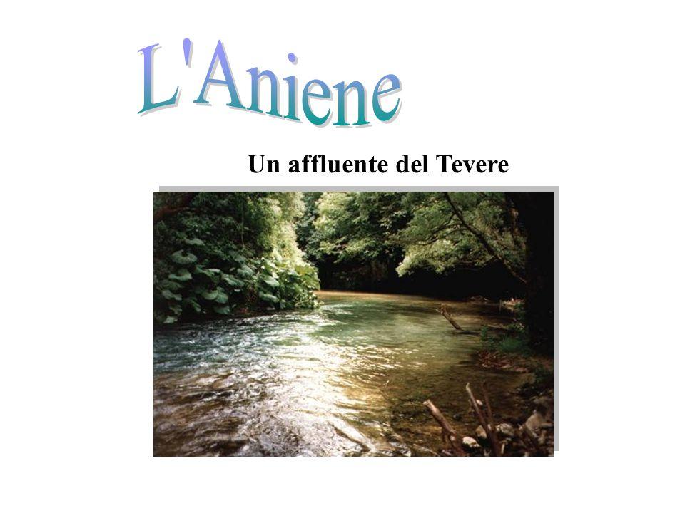 Un affluente del Tevere