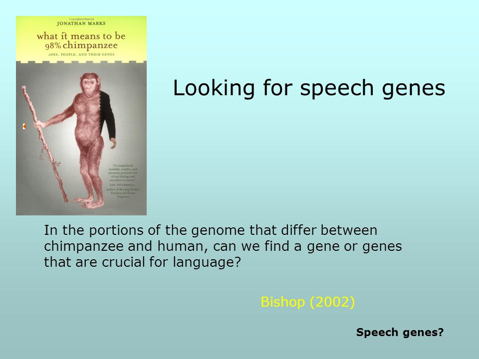 Looking for speech genes Bishop (2002) In the portions of the genome that differ between chimpanzee and human, can we find a gene or genes that are crucial for language.