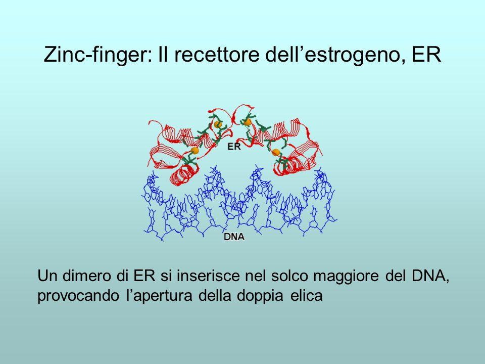 Geni inattivi sono metilati Contengono residui di 5-metil-citosina Il contenuto di 5-metil-citosina è inversamente correlato al livello di espressione genica Sostituendo alla citosina un suo analogo non metilabile, la 5-azacitidina, si attivano geni normalmente inattivi
