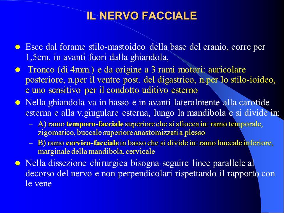 IL NERVO FACCIALE Esce dal forame stilo-mastoideo della base del cranio, corre per 1,5cm. in avanti fuori dalla ghiandola, Tronco (di 4mm.) e da origi