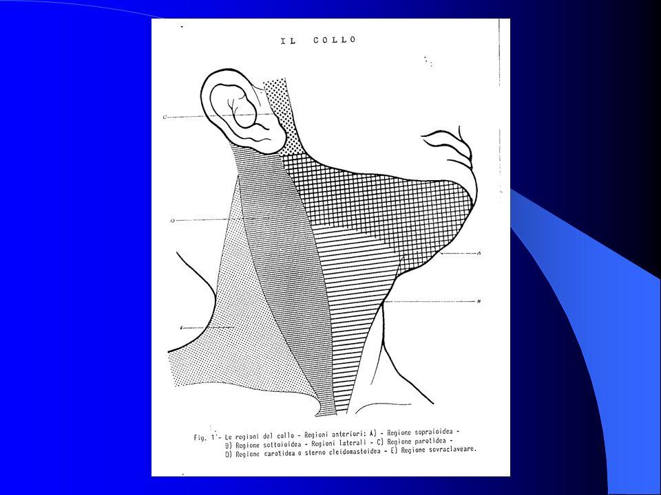 ANATOMIA DELLA LOGGIA PAROTIDEA La loggia parotidea è una fossa profonda osteomucolofibrosa a forma di piramide rovesciata che comprende 4 facce, una base superficiale cutanea e un apice mediale faringea.