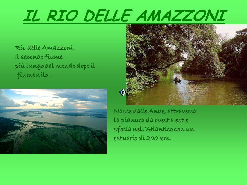 IL RIO DELLE AMAZZONI Rio delle Amazzoni.Il secondo fiume più lungo del mondo dopo il fiume nilo..