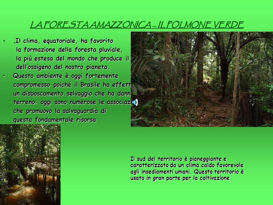 LA FORESTA AMAZZONICA … IL POLMONE VERDE.Il clima, equatoriale, ha favorito.Il clima, equatoriale, ha favorito la formazione della foresta pluviale, la formazione della foresta pluviale, la più estesa del mondo che produce il 50% la più estesa del mondo che produce il 50% dellossigeno del nostro pianeta.