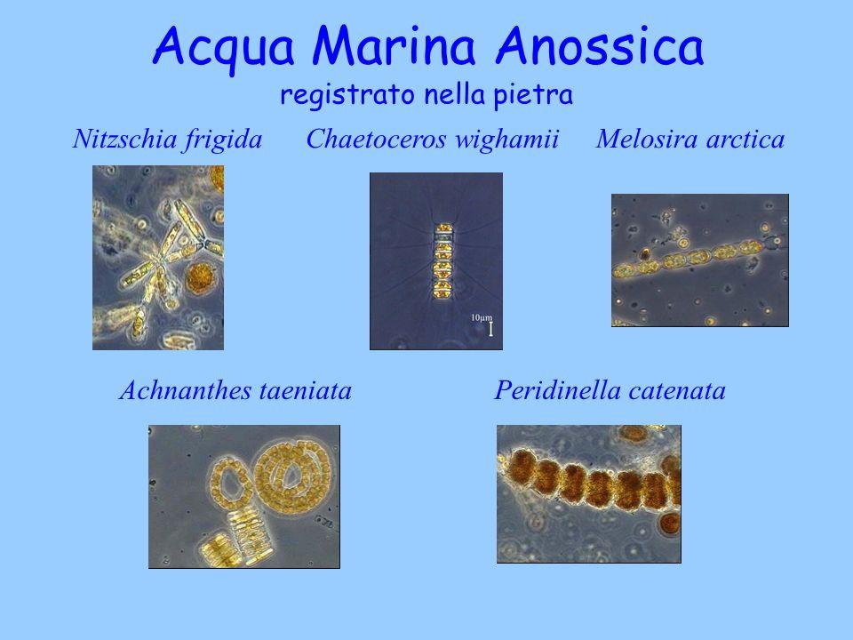 Acqua Marina Anossica registrato nella pietra Nitzschia frigida Chaetoceros wighamii Melosira arctica Achnanthes taeniata Peridinella catenata