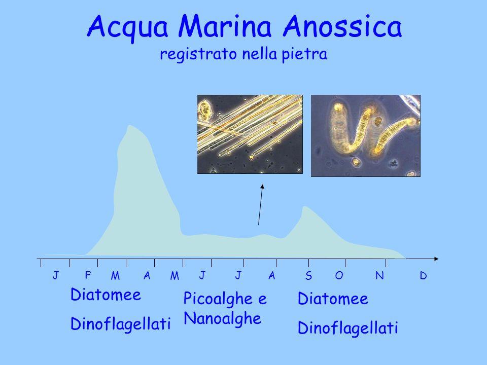 Acqua Marina Anossica registrato nella pietra J F M A M J J A S O N D Diatomee Dinoflagellati Picoalghe e Nanoalghe Diatomee Dinoflagellati
