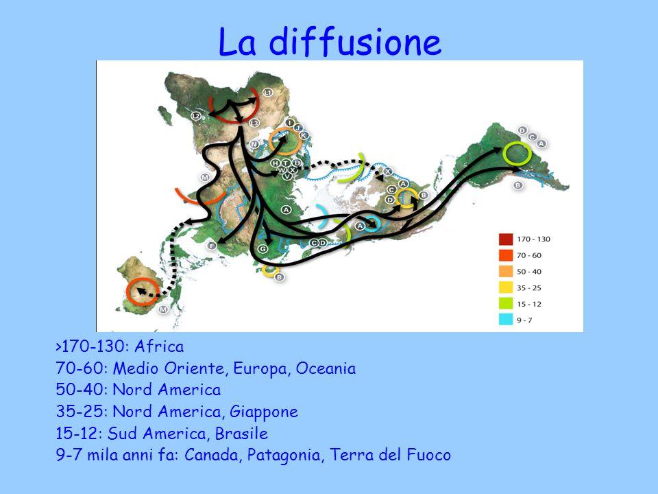 La diffusione >170-130: Africa 70-60: Medio Oriente, Europa, Oceania 50-40: Nord America 35-25: Nord America, Giappone 15-12: Sud America, Brasile 9-7