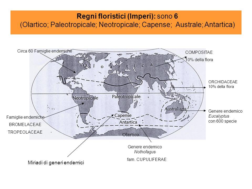 ORCHIDACEAE 10% della flora Genere endemico Eucalyptus con 600 specie Regni floristici (Imperi): sono 6 (Olartico; Paleotropicale; Neotropicale; Capense; Australe; Antartica) Olartico COMPOSITAE 10% della flora Circa 60 Famiglie endemiche Miriadi di generi endemici Genere endemico Nothofagus fam.