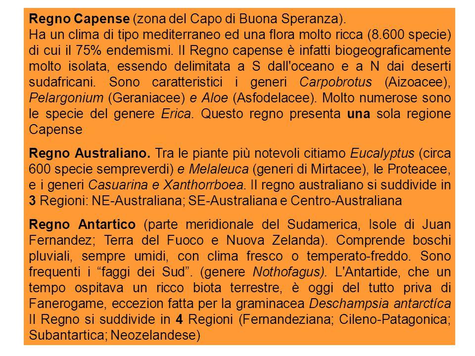 Gruppi ad ampia distribuzione: Pantrop.