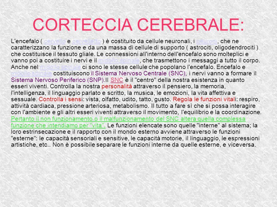 CORTECCIA CEREBRALE: L'encefalo ( cervello e cervelletto ) è costituito da cellule neuronali, i neuroni, che ne caratterizzano la funzione e da una ma
