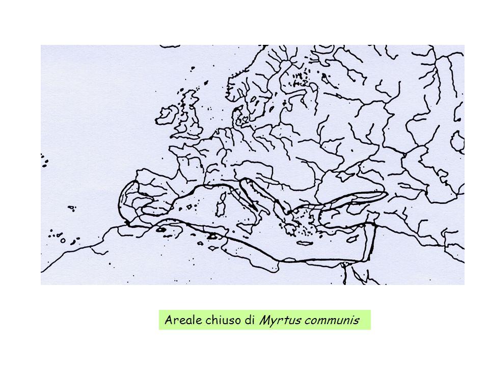 Areale chiuso di Myrtus communis